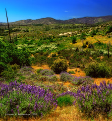JM_Yosemite_05_23_17_440 (HarrySchue) Tags: nationalparks yosemite foresta nature landscape mountains nikon d800e outdoors serene
