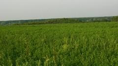 (Michael Kůr) Tags: českárepublika czechrepublic jižnímorava southmoravia dolníbojanovice pole field krajina landscape countryside
