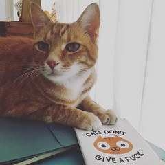 Cat's don't give a F**** (rjmiller1807) Tags: cat kitty ginger meow ohhdeer gingercat catsdontgiveafuck vetkat funny iphone iphonese iphonography 2017
