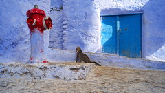point of view (pepe amestoy) Tags: streetphotography minimalism chefchaouen marocco fujifilm xe1 voigtländer color skopar 421 vm m mount