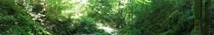 Ehrbachklamm (Ris Bo) Tags: wandern hiking tour trip panorama klamm ravine nature outdoor germany rhineland traumschleife premiumwanderweg hunsrück hunsrueck dreamy deutschland
