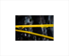The Implied Menace of a Taut Yellow Clothes Line. (Mikec77) Tags: clothesline yellow black tension abstract
