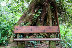 A Hobbit bench - HBM [Explored] (Jessie T*) Tags: benchmonday bench pacificrimnationalpark vancouverislandbc combersbeachtrail rainforest hobbits