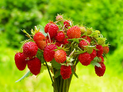 (Alin B.) Tags: alinbrotea nature fragi strawberries fruits forest wild tastyberries red