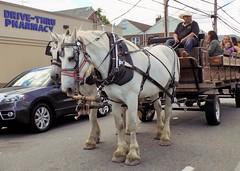 Running Errands (KaDeWeGirl) Tags: newyorkcity bronx throgsneck pharmacy horses wagon ride
