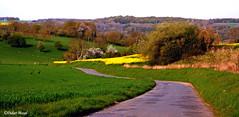 Route de campagne au coucher du soleil printanier (didier95) Tags: parcnaturelduvexin vexin campagne paysage rouge printemps valdoise iledefrance champ colza