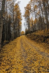Trail to Sunny Pass, Pasayten Wilderness (i8seattle) Tags: pasayten pasaytenwilderness cathedrallake cathedralpeak amphitheatermountain irongatetrailhead toatscouleeroad larch windypeak uppercathedrallake cathedralpass