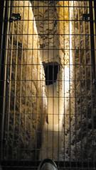 Gallergolv. (Veli Vilppu) Tags: 1036m 490m archaeological borås egeiskahavet eupalinos eupalinostunnel greece grekland mountkastro museum mäkikihniä pythagorion samos velivilppu aqueduct belysning galler hjälm huka kanal odysseus sten sverige sweden tunnel veli vilppu ευπαλίνειοόρυγμα