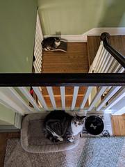 google nexus6p cats tora pooj (Photo: gtxtom on Flickr)