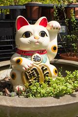 IMG_4384 (翔志) Tags: taiwan taoyuan fuxing shanggaorao valley garden taoyuanhsienku 桃源仙谷