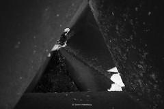 _DSF8250_ORIGINAL-FORMAT (izumi masakazu) Tags: monochrome streetsnap flickr cat 猫 ネコ ねこ shadow silhouette light spotlight river plant tetrapod 影 シルエット 光 スポットライト 川 河 植物 草 テトラポット