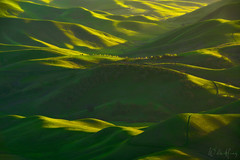 Lush Valley (Willie Huang Photo) Tags: california northerncalifornia bayarea southerncalifornia rollinghills hills green spring grass light shadow landscape nature scenic