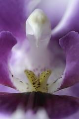_DSC1102_Orkide (ArildMoe) Tags: blomster orkide