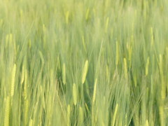 The Scream meets The 6th Sense (m_artijn) Tags: scream sixth 6th sense hizenryuo jpn rice field magical realism