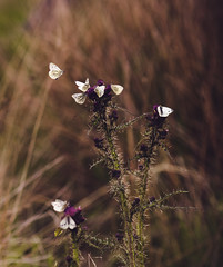 Butterfly paradise (creyala) Tags: butterfly butterflies colors mood lightroom vintage nikon d7000 grass insect life hidden wing flapping