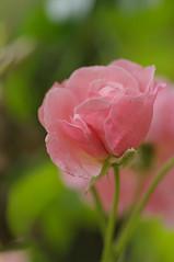 20170702_Jardins_Secrets_Vaulx_Fl (18 sur 20) (calace74) Tags: rhonealpes fleur france insectes jardin jardinssecrets macro vaulx