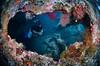 W R E C K (irwinunderwater) Tags: irwinunderwater irwinang diveadvisor underwaterphotograhy divetravel underwaterlife underwatercamera nikonasia nauticam uwphoto picoftheday potd diveindonesia natgeo tulamben lighting coralreef indonesia bali wreck underwaterworld libertywreck paditv padi diverlife iamnikon instadive uwphotography nikon