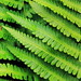 Ferns : Slices of Nature