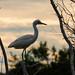 week 25 - egret