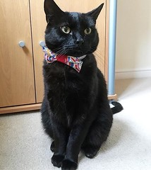 #Repost @atouchofbasil ・・・ Best Monday Ever!  I'm looking fancy & it's all thanks to my buddies @sumak_and_siyah for this pawsome giveaway prize!! Their Mum is super talented! 😻Thank Mew SO much for my bow tie, I love it! 😽:kiss (FluffWonderland) Tags: cats catsuk blackcats handsomeboy blackcatstellall catsofinstagram catoftheday bestmeow thecatcommunity blackcat blackcatcrew handsome blackcatsofinstagram basil repost fantasticfurballs blackcatsruletheworld bestcatsclub adoptdontshop blackcatsrule mycatphoto goodboy cat meowbeauties fluffycatcrew blackcatsofig