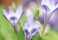 _DSC0003-1758 (SteveKenilworth2014) Tags: flower flowers blossom bugs bug summer