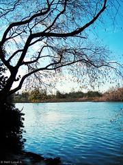 L'oscuro fiume (Inés Luque Aravena) Tags: fiume river río valdivia chile sur giardino garden jardín nature natura naturaleza branch rama ramo albero tree árbol austral botánico botanic