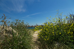 The lighthouse (khan.Nirrep.Photo) Tags: f4 flower fleur bretagne breizh bleu blue beach plage paysage phare ciel canon canon6d finistère lighthouse flickrunitedaward