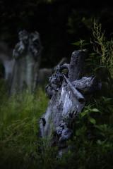 . (bluestardrop - Andrea Mucelli) Tags: cimitero cemetry tomba tomb piemonte piedmont grave croce cross