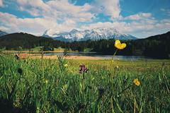 Geroldsee (░░░░░░░░░░) Tags: geroldsee wagenbrüchsee krun germany lake meadow flowers mountains alps
