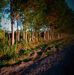 Naranjo (Jonathan Schultheis) Tags: orange fruits trees road entrerios argentina