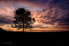 Sunset (Claudia Bacher Photography) Tags: sunset sonnenuntergang baum tree wolken clouds himmel heaven sonne sun abendstimmung landschaft landscape natur nature outdoor suisse schweiz switzerland