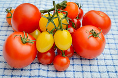 Summer tomatoes. (David M:) Tags: food red yellow photography foodinnorfolk blue vine tomato delicious seasonal art colour