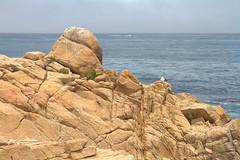 IMG_0172_174 Point Joe HDR (vicjuan) Tags: 20170625 美國 usa 加州 california montereycounty hdr tonemapping pebblebeach geotagged geo:lat=36609794 geo:lon=121957021 海 sea 太平洋 pacificocean 鳥 bird 海鷗 seagull pointjoe