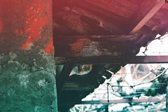 Cat 2 @catsedition9 (Robert Krstevski) Tags: robertkrstevski cat cats catsedition9 pet pets animal animals animallovers animalslove cute cuteness kitty kitten kittens kitties gatos gato кошка кошки котки котка popular photooftheday photography photograph photo photographer catsofinstagram catsofflicker catsoftwitter nikon