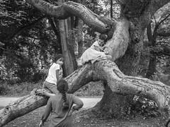 scene.in the park. (judydeanclasen) Tags: streetphotography mono düsseldorf volksgarten branches tree park treeclimbing children