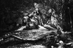 En el bosque II - Into the woods II (jmpastorg) Tags: byn bw blancoynegro blackandwhite blanco white paisaje landscape longeexposure largaexposición river rio cascada waterfall water españa alicante spain verano summer 2017 1750 d5100 nikon