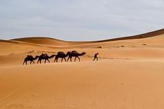 (Giramund) Tags: morocco africa april desert dunes sand camel
