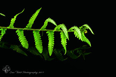 Back to Black with Bracken and reflections. (Sue_Todd) Tags: 2017 black bracken colours commercialphotographer fern green photographer suetodd suetoddphotography summer typesofpicture vegetation czarny foodphotographer greenish greens greeny groen grön grøn grønn grün musta negro nero nigra noir productphotographer schwarz siyah sort svart verdajn verde vert vihreä yeşil zielony zwart