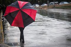 8 - Huyendo a casa bajo la lluuvia - 14Jun17 (oemilio16) Tags: cdmx ciudad de méxico lluvia rain raining canon umbrella paraguas sombrilla agua street calle streetphotography lloviendo t6 1300d kissx80 city df