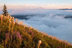 Magic light (Laura Jacobsen) Tags: alpinelakeswilderness bandera banderamountain hiking i90 iraspringtrail littlebandera mountains sunset trails washington wildflowers