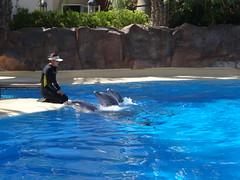 DSC00575 (jrucker94) Tags: vegas water dolphin swimming show secretgarden