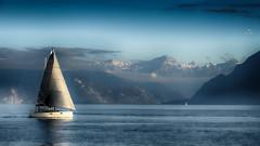 Cap au...Bleu !! (Fred&rique) Tags: lumixfz1000 photoshop raw hdr lac léman suisse lausanne voilier b leu eau montagnes paysage nature