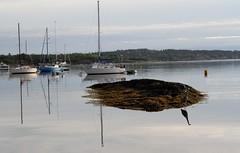 Oak Bay Marina with Great Blue Heron (Paul Cottis) Tags: paulcottis oakbay victoria vancouverisland 18 may 2017 reflection