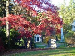 P1060819 (amiterangi1) Tags: woodlawncemetery autumn cemetery woodlawn
