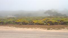 IMG_0211_213 Pebble Beach HDR (vicjuan) Tags: 20170625 美國 usa 加州 california montereycounty hdr tonemapping pebblebeach geotagged geo:lat=36592070 geo:lon=121963850