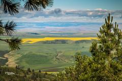 Lapwai Valley (JGemplerPhotography) Tags: idaho lapwai valley yellow canola rapeseed