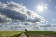 Summer Idyll (CoolMcFlash) Tags: landscape tree sun sunlight sunny sunflare summer austria loweraustria path way idyllic rural cloud sky rays light landschaft field fujifilm xt2 weather nature natur baum sonne sonnenlicht sonnig sonnenstrahlen sommer österreich niederösterreich weg pfad idyllisch ländlich wolke himmel strahlen licht feld wetter fotografie photography woodquarter waldviertel xf 18135mm f3556r lm ois wr