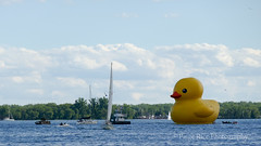 Duckie (Paige Rice) Tags: harbourfront city toronto duck rubberduckie 121000duck yellow yellowduck