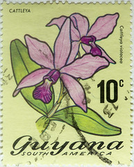 Guyana 10 cents Cattleya