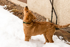 (emeksv) Tags: darkhorse willow bestof homes pets type coloradosprings colorado unitedstates